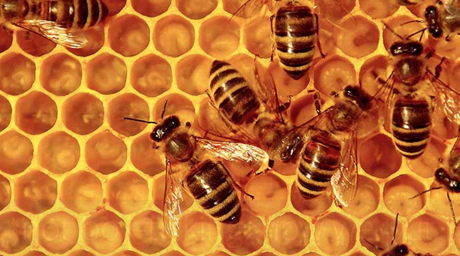 Beekeeping, not box-ticking: how we put ESG into practice in real estate